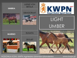 6. Light Umber