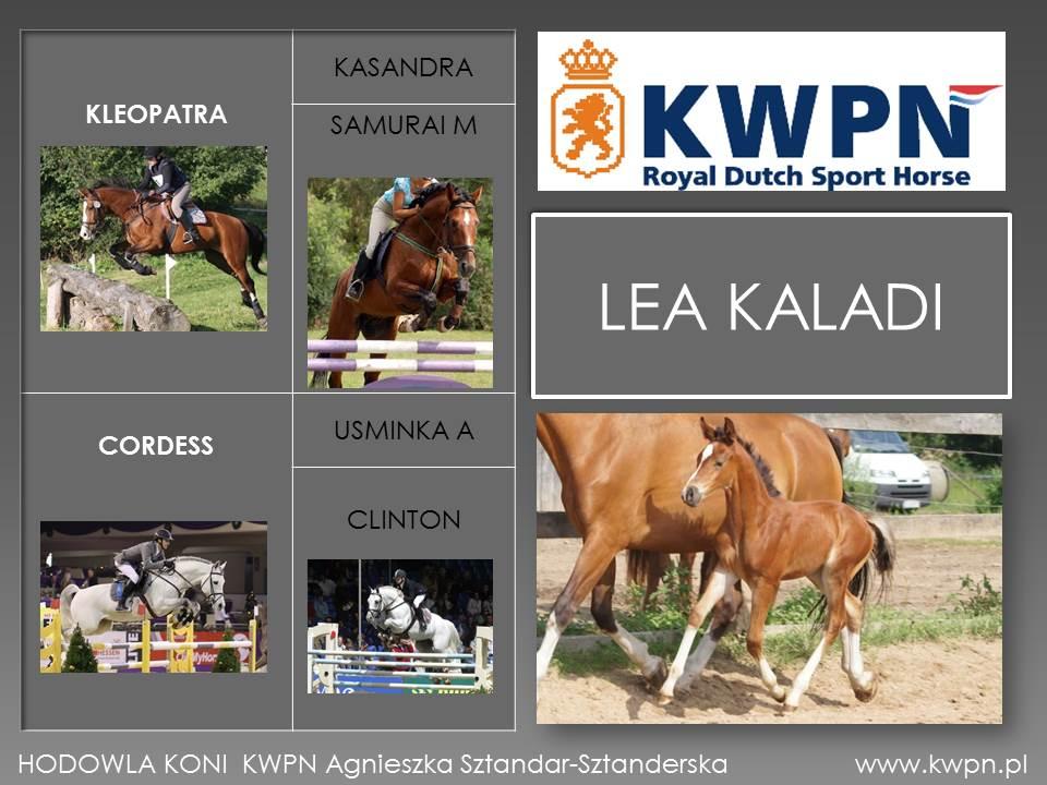7. Lea Kaladi