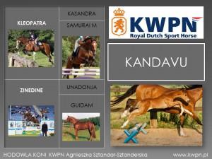 3. Kandavu