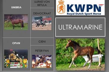 5. Ultramarine