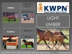 6. Light Umber