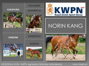 11. Norin Kang